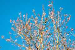 Der Blumenkönigintiger Stockfoto
