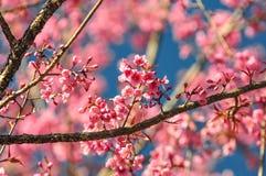 Der Blumenkönigintiger Stockfotos