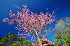Der Blumenkönigintiger Stockbilder