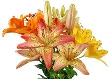 Der Blumenstrauß der lillys Stockfotos