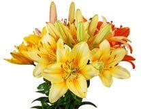 Der Blumenstrauß der lillys Lizenzfreie Stockbilder
