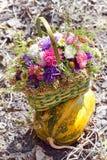 Der Blumenstrauß von Astern auf einem gestreiften Kürbis Lizenzfreie Stockbilder