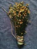 Der Blumenstrauß von camomiles Stockfotografie