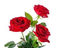 Der Blumenstrauß von roten Rosen Lizenzfreie Stockbilder