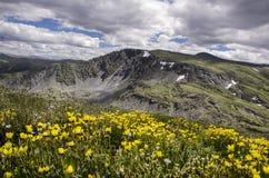 Der Blumenteppich stockfotos
