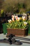 Der Blumentopf. stockfotografie