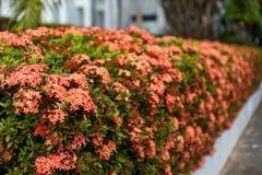 Der Blumenzaun lizenzfreie stockbilder