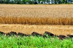 Der Boden auf dem Maisgebiet Stockbilder