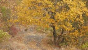 Der Boden wird mit gelben gefallenen Blättern umfaßt stock video footage
