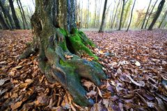 Der Boden wird mit gelben gefallenen Blättern umfaßt Lizenzfreie Stockfotos