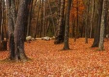 Der Boden wird mit gelben gefallenen Blättern umfaßt Stockfotografie