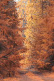 Der Boden wird mit gelben gefallenen Blättern umfaßt Lizenzfreie Stockfotografie
