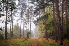 Der Boden wird mit gelben gefallenen Blättern umfaßt Lizenzfreie Stockbilder