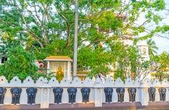 Der Bodhi-Baum von Bodhirajaramaya-Tempel in Negombo Stockbild