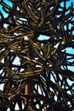 Der brennende Schlangen- oder Affebaum, Abschluss oben Stockbild