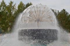 Der Brunnen Löwenzahn auf dem Hintergrund von Bäumen Stockfoto