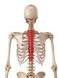 Der Brust- Dorn stock abbildung