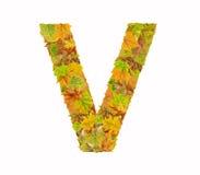Der Buchstabe V des Alphabetes gemacht vom Herbstlaub Stockbilder