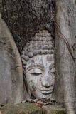 Der Buddha ist in der hölzernen Wurzel stockfoto