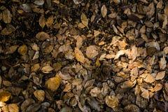Der bunte gefallene Herbst verlässt auf braunem Waldbodenhintergrund Stockfotografie