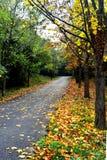 der bunte Hintergrund Fall-Bäume und Blätter Lizenzfreie Stockbilder