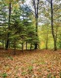 der bunte Hintergrund Fall-Bäume und Blätter Stockbilder