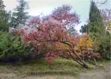 der bunte Hintergrund Fall-Bäume und Blätter Stockfotos