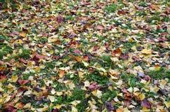 der bunte Hintergrund Fall-Bäume und Blätter Lizenzfreies Stockbild