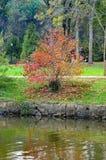 der bunte Hintergrund Fall-Bäume und Blätter Lizenzfreie Stockfotografie