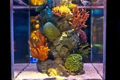 Der bunte Seefischbehälter Stockfoto