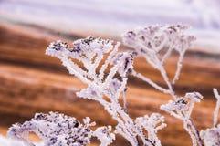 Der Busch verzweigt sich mit den Samen, die durch den Schnee bedeckt werden Lizenzfreie Stockfotos