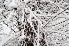 Der Busch wird mit Schnee bedeckt Lizenzfreie Stockbilder