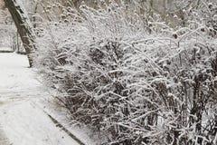 Der Busch wird mit Schnee bedeckt Lizenzfreie Stockfotografie