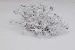 Der Busch wird mit Schnee bedeckt Lizenzfreies Stockfoto