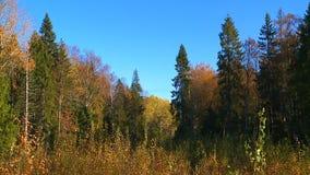 Der Charme des goldenen Herbstes stock video