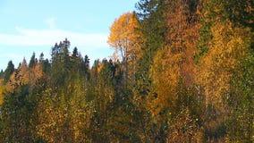 Der Charme des goldenen Herbstes stock footage