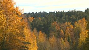 Der Charme des goldenen Herbstes stock video footage