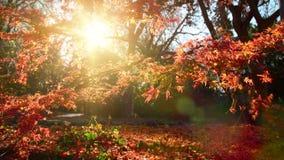 Der Charme eines sonnigen Herbsttages stock video