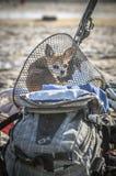 Der Chihuahuahund sitzt im Fahrradwarenkorb sonnigen Tag genießend Lizenzfreies Stockfoto