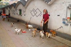 Der chinesische alte Mann in den streunenden Hunden Lizenzfreie Stockbilder