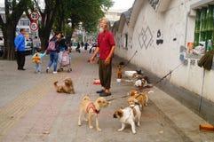 Der chinesische alte Mann in den streunenden Hunden Stockfoto