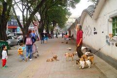 Der chinesische alte Mann in den streunenden Hunden Stockbilder