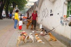 Der chinesische alte Mann in den streunenden Hunden Lizenzfreie Stockfotografie