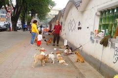 Der chinesische alte Mann in den streunenden Hunden Lizenzfreies Stockfoto