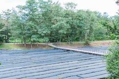 Der Daio-Wasabi-Bauernhof ist einer von Japan-` s größten Wasabibauernhöfen herein Lizenzfreies Stockbild