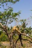 Der defekte Baum Lizenzfreie Stockfotografie