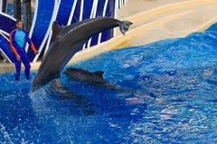 Der Delphin springend in bunte Delphin-Tagesshow; Es ist eine festliche Feier unserer nat?rlichen Welt bei Seaworld im internatio stockfotos