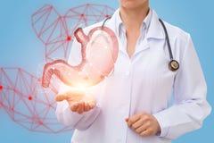 Der Doktor zeigt den Magen Lizenzfreie Stockfotografie