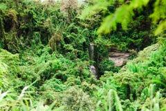 Der Dschungel Lizenzfreie Stockfotos