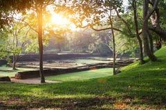 Der Dschungelsonnenuntergang Stockfotografie